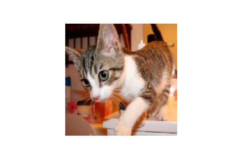 Cats vs Dogs classifier ·
